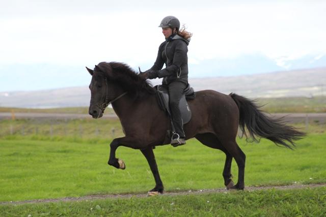 Melódía frá Sauðárkróki