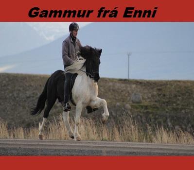 gammur_fra_enni