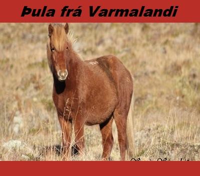 thula_fra_varmalandi
