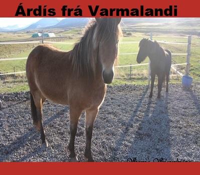ardis_fra_varmalandi